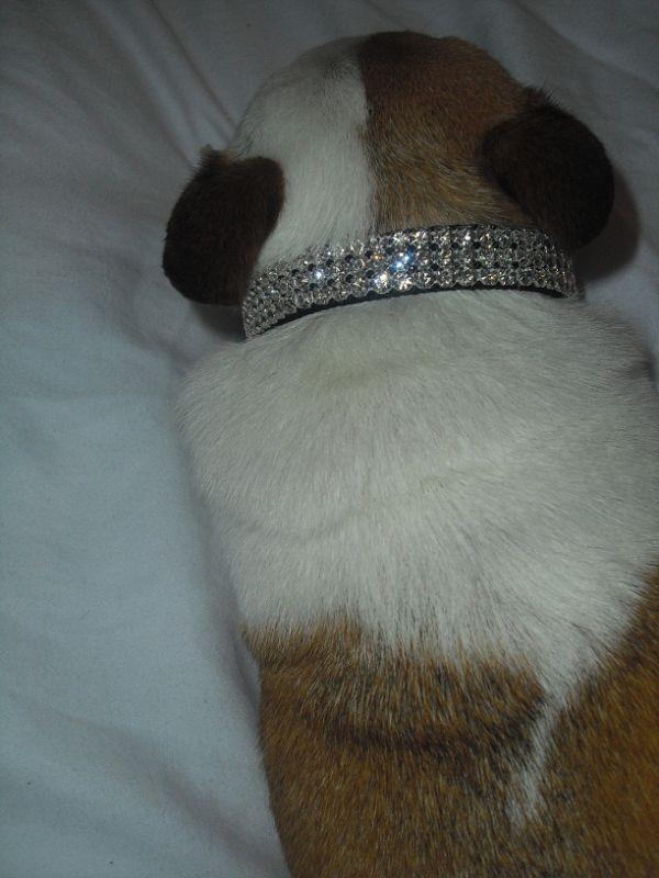 Black Swarovski Crystal Rhinestone Dog Collar 8 10